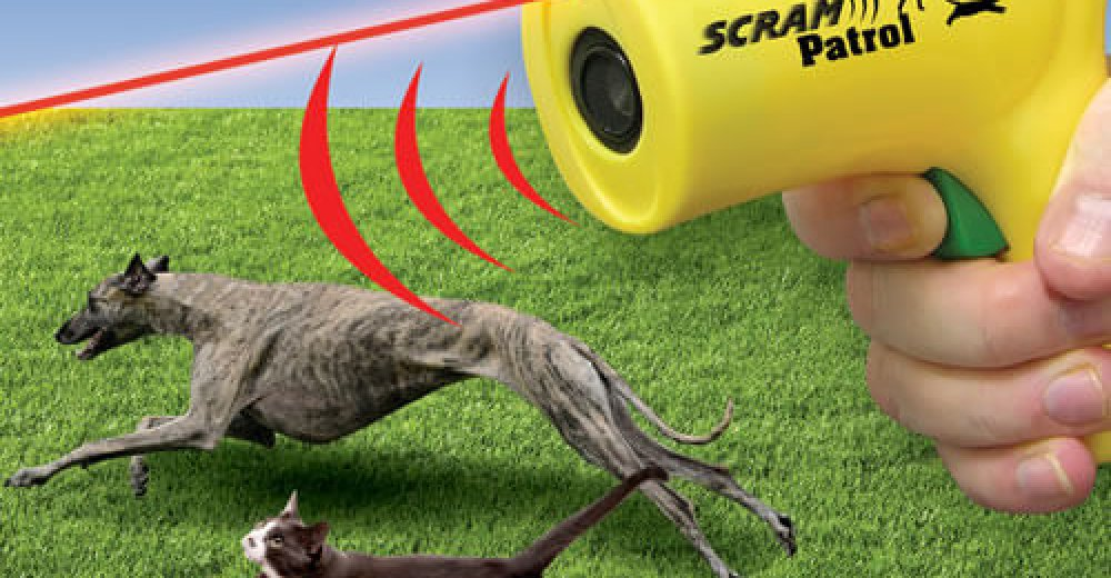scram-patrol-chaser